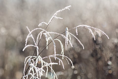 untitled (robwiddowson) Tags: icecrystals ice crystals grass nature natural winter cold robertwiddowson photo photograph photography image picture