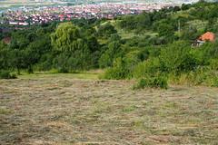 szna / hay (debreczeniemoke) Tags: nyr summer rt meadow kaszl szna hay olympusem5