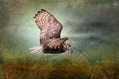 GHO: The Life Nocturnal (Johnrw1491) Tags: great horned owl flight photography artistic interpretation life nocturnal birds avian prey wildlife animals nature wings