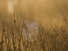 Spider-Web-8915 (Kulama) Tags: spiderweb summer earlymorning sunrise canon7d sigma150600c563 nature