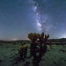 Cholla and the Milky Way