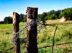 Barbed Wire Wrapped Fence Post in Color (Omni-Photography) Tags: fence post barbed wire ektar 100 kodak film scan