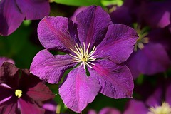 *** (pszcz9) Tags: polska poland przyroda nature natura ogrd garden kwiat flower zblienie closeup beautifulearth sony a77