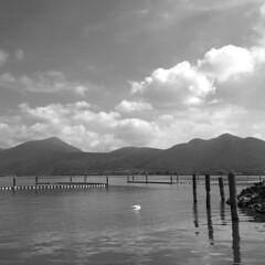 (Paolo Cozzarizza) Tags: italia lombardia brescia iseo acqua lago lungolago panorama cigno pennuto cielo