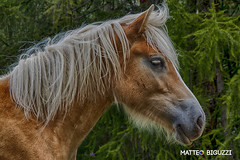 20160829_HORSE (Matteo Biguzzi [bigu77]) Tags: horse cavallo natura libertà eos500d eosrebelt1i canon nature