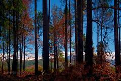 Trees Road to Boquete (Bienveqe) Tags: boquete panamá canoneosrebelxs trees colours colors canonefs1855mmf3556stm mountainview landscape nature roadto arboles bienvefotos naturaleza paisaje