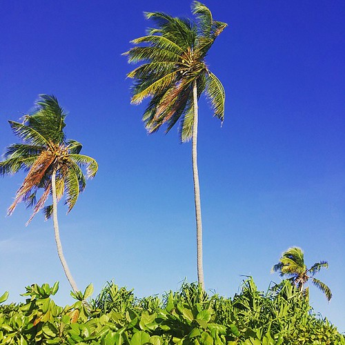 #beautiful #dharanboodhoo #bluesky #skyporn #coconuttree