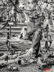 Pigeon lover (Street Photo NYC) Tags: street city nyc people blackandwhite bw ny newyork streets monochrome birds nikon manhattan pigeon streetphoto feed d600