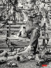Pigeon lover (Street Photo NYC) Tags: street city nyc people blackandwhite bw ny newyork streets monochrome birds nikon manhattan pigeon streetphoto feed d600