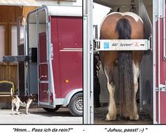 Erfolgreich verladen ;-) (HendrikSchulz) Tags: germany deutschland hund sammy pferd tierfotografie pferdehnger pferdefotografie lordsingclaire friesenstallweh hendrikschulz hendriktschulz friesengesttweh