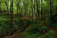 Forest (sertanarslan) Tags: green nature forest sony ilca77m2