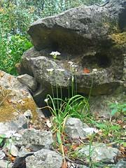 Wild Flowers (Lydie's) Tags: grass rocks croatia wildflowers babinkuk