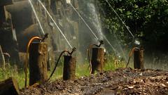 Drive Thru Refreshing (offroadsound) Tags: drivethrurefreshing sprinkler sprinklers wood trunks refreshing forest