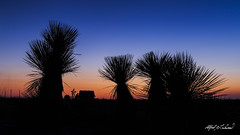 High Country Dusk (Alfred J. Lockwood Photography) Tags: sunset nature silhouette landscape nationalpark spring dusk yucca clearsky guadalupemountainsnationalpark alfredjlockwood