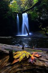Fall at Stocking Creek (mysticislandphoto) Tags: stocking saltair autumn fall vancouver island waterfalls