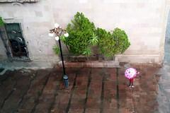 Y sigue lloviendo (-Angie Z) Tags: summer rain mxico lluvia verano slp huasteca sanluispotos ciudadcolonial plazadearanzaz ciudadescoloniales museoregionalpotosino