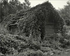 2016-07-24   014-02web (Yuriy Sanin) Tags:      overgrown  thicket  abandoned  building  plants blackandwhite bw yuriy sanin wistasp 4x5 fujinon1809 foma 100 largeformat