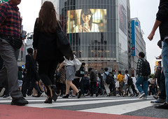 Shibiuya crossing crowded with pedestrians, Kanto region, Tokyo, Japan (Eric Lafforgue) Tags: road street city people urban japan horizontal advertising outdoors japanese tokyo asia day crossing crowd shibuya citylife billboard advertisement busy pedestrians billboards popular adults advertisements groupofpeople zebracrossing crowded advertise urbanscene kantoregion advertisingsign buildingexterior urbanarea advertisingsigns 9people mixedagerange colourpicture japan161033