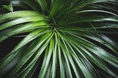 Plants (justine.jeannin) Tags: plant carnivorous greenhouse glasshouse green lyon tropical breath tte dor canon 6d glass tree