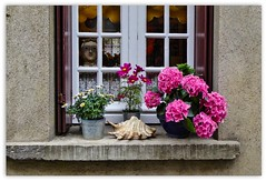 la finestra sul cortile ... (miriam ulivi) Tags: miriamulivi panasonicdmctz60 francia normandia honfleur finestra window fiori flowers conchiglia shell luce light