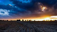 DSC_0166 (timmie_winch) Tags: nikon nikond3000 d3000 august august2016 2016 sun sunset sunsetsuffolk sunsetoversuffolkcountryside sunsetovercornfields sunsetovercornfield silhouette 18105mm 18105vr nikon18105mmvrlens shadows golden goldenhour goldenlight elliedunn ellie eleanordunn ells eleanor ellsdunn dunn landscape landscapephotography landscapephotographer naturephotographer naturephotography nature timwinchphotography tim timwinch winch debenham ip14 suffolk