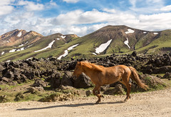 Iceland - the Horse Power in Landmannalaugar (Jacopo.Colombo) Tags: 6d canon6d canoneos6d iceland islanda 50mmf12 50mm canonef50mmf12lusm ef50mmf12lusm landmannalaugar hp 1hp 1cv