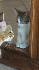 Quadretto familiare! (esterinaeliseo1) Tags: mici animali aristogatti felini gatti