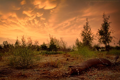 Hot Evening [EXPLORED] (Falcon EyE) Tags: landscape sunset forest clouds cloud dramatic hot summer warmcolors nature wild wildlife tree trees sigma1835mmf18art 1835 f18 art