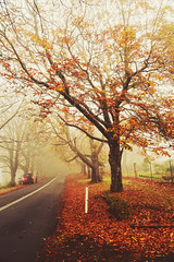 Prelude (Amanda Mabel) Tags: road blue autumn trees red mountains fall nature leaves landscape photography maple surreal australia ethereal prelude amandamabel