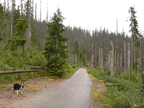 Home of the Bark beetle