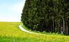 Springtime (Habub3) Tags: green yellow forest canon spring powershot wald springtime frühling g12 2015 welzheim habub3