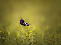 summer start (irina_escoffery) Tags: summer canon butterfly 28 70200