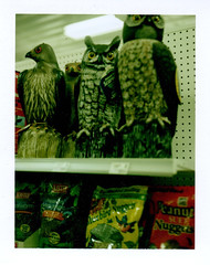 hawk and owl at the hardware store (EllenJo) Tags: polaroid hardwarestore ace may az cottonwood acehardware landcamera verdevalley cottonwoodarizona 2015 polaroidlandcamera may25 fakeowl fakehawk fujifp100c fujiinstantfilm ellenjo ellenjoroberts polaroidpathfinder rollfilmcameraconvertedtopackfilm convertedpathfinder birdaisle