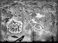 Oceanus Rubigo (rsmithing) Tags: ocean blackandwhite eye monochrome vines rust peeling paint noiretblanc map surrealism surreal smartphone photomontage handcrafted surrealist crow nautical navigation beasts biancoenero iphone blancetnoir  siyahbeyaz oceanus flowersseries hitamputih pretoybranco flowerblackandwhite  rustocean iphoneography iphone6 rubigo  oceanusrubigo oceanofrust mobilephotogaraphy