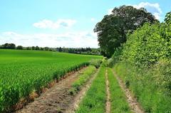 23381 (benbobjr) Tags: uk greatbritain england english unitedkingdom britain path lincolnshire lincoln gb british footpath pathway parkside bridleway midlands publicfootpath eastmidlands greenfields nettleham thedales westlindsey
