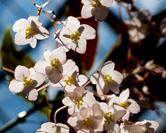 P7129637 (Mark J. Stein) Tags: plant flower nature closeup longwoodgardens 2016 photobymarkjstein photobymarkstein
