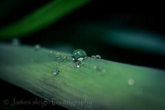 Fuji x-t10 carl zeiss (Jasrmcf) Tags: fuji fujinon fujifilm fujixt10 fujimacro macro dof bokeh bokehlicious bokehgraph green grass rain droplets water reflection carlzeiss beautiful smooth
