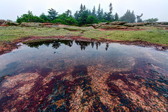 Reflecting pool, Cadillac Mountain (The Burgys) Tags: landscape acadia nationalpark acadianationalpark maine mountdesertisland mdi sunset fog color rocks granite reflection pool water trees sony a99 sonya99 zeiss zeiss1635 summer polarizer wideangle cadillacmountain