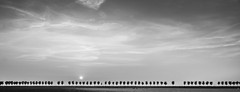 Three After Three BW (DieLei) Tags: polder three bomen sunset nederland dutch beemster green sun fench cow landscape landscapes panorama black white blackandwhite cloud clouds cloudy nikon tokina sky outdoor
