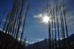 Sunlight with dark trees (Furqan LW) Tags: nagarvalley hunzavalley gilgit pakistan landscape nature naturephotography blossom bloosom night sunset longexposure sundown