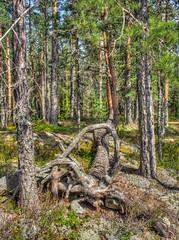 Karihiekan mets (MikeAncient) Tags: karihiekka juva suomi finland hdr handheldhdr tonemapped tonemap 5exp geotagged