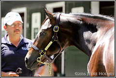 Hip 206 (Spruceton Spook) Tags: orb fasigtipton saratoga yearlings