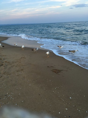 ~~ Hungry Gulls waiting for food ~~