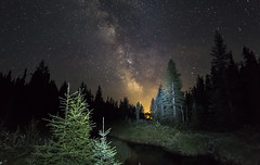 Fire in the Sky (muradjafari) Tags: milkyway nightscene nightsky trees water outdoors light spruce bog