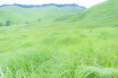 3Tonomine Highland (anglo10) Tags:    field  japan