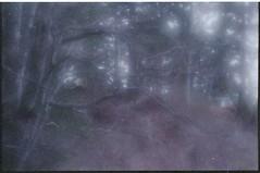 (bensn) Tags: pentax mzs fa 85mm f28 soft lens film kodak supra 800 trees woods light