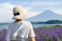 Lavender & Fujiyama. (bgfotologue) Tags: 2016 500px bgphoto image imaging japan landscape nippon outdoor photo photography summer tumblr bellphoto       hongkong
