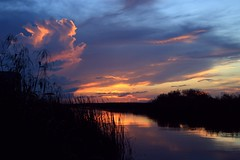 By the Riverbank (PelicanPete) Tags: sunset cloudscape cloudburst calm serene nature beauty natural hometown florida unitedstates usa floridaeverglades riverofgrass open space colorful dramatic composition summer2016 9716 southflorida broward river grass intense coralspringsflorida outdoor sky horizon bytheriverbank west cloud landscape water shore dusk coast firelightsunset glow