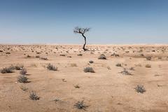 شجرة وحيدة (eneko123) Tags: tree one 1 alone desert bat uno árbol desierto oman baum solitario wüste solitaire désert eneko123 omán sultanateofoman omani sultanate عمان شجرة سلطنة عُمان bakarti وحيدة オマーン basamortu