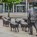 SHEEP ON THE ROAD [ Deborah Brown] REF-104827